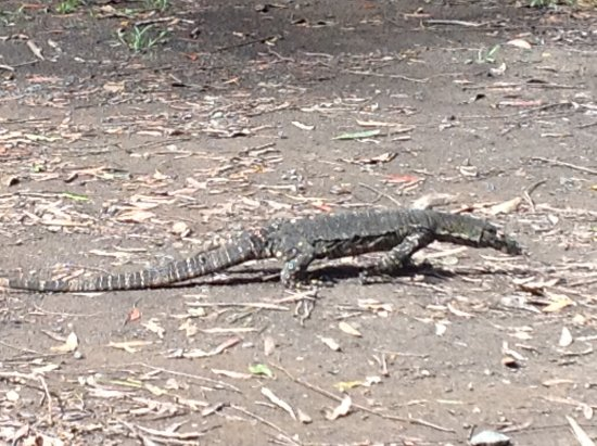 Bangalow, Australia: The locals come to greet you