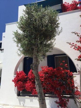 Ikaros Studios & Apartments: photo3.jpg