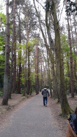 Malahide, أيرلندا: bosque alrededores