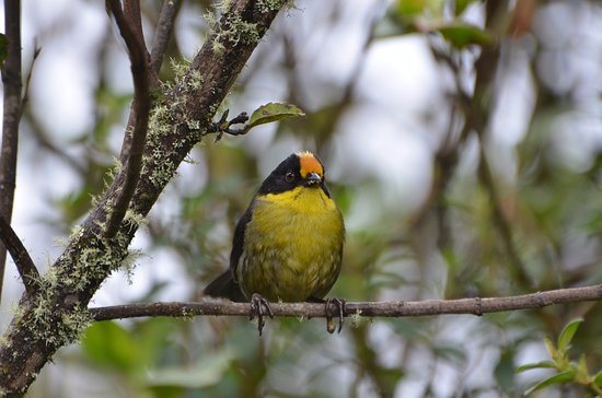 Hotel Tinamu Birding Nature Reserve