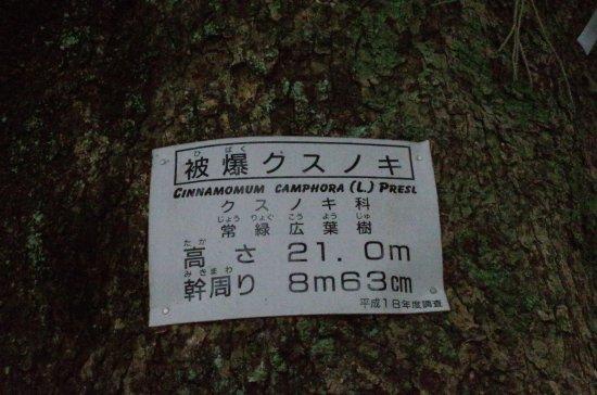 Foto de One-legged Torii