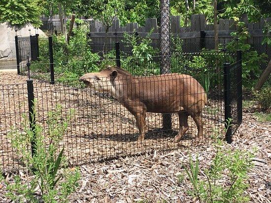 Parc zoologique de Paris : photo0.jpg