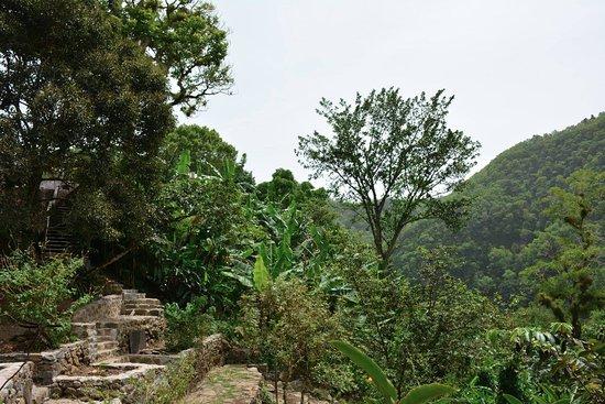 Vieux-Habitants, Guadeloupe: Le jardin créole