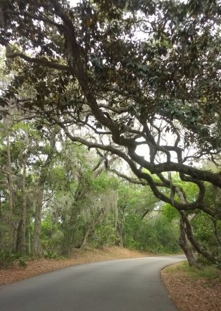 Fort Clinch State Park: Driving through the park.