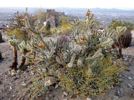 Phoenix South Mountain Park by Schep 2014