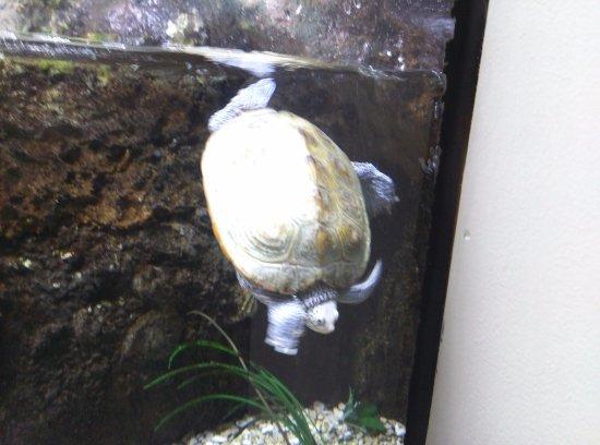 Sea turtle at Newport Aquarium.