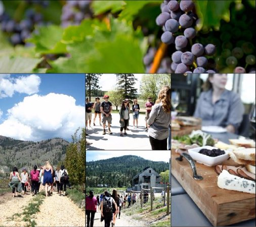 Kamloops, Kanada: Guided Walking Vineyard Tours at Monte Creek Ranch Winery