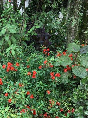 La Posada del Quinde: Garden area flowers