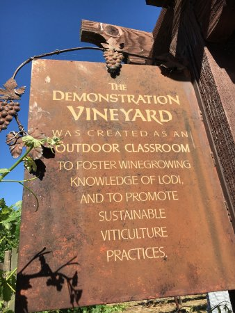 """Lodi Wine & Visitor Center: A """"must-see"""" for wine-lovers"""