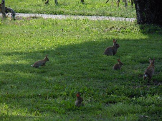 Castelfranco Emilia, İtalya: Nel parco potrete vedere anche leprotti scorrazzare per il prato