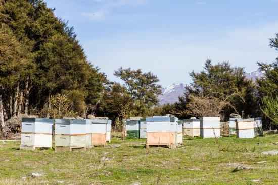 Wanaka, Yeni Zelanda: honey