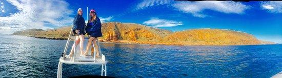 Kangaroo Island Marine Adventures: image1_large.jpg
