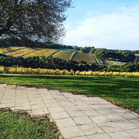Rosebud, Australia: Tucks Ridge Estate looking amazing in Autumn.