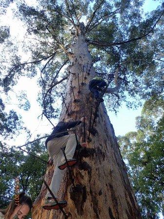 Pemberton, Αυστραλία: Going down