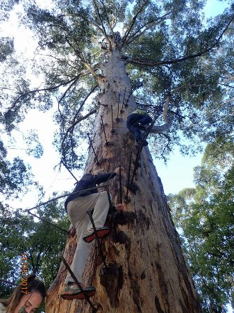 Pemberton, Australia: Going down