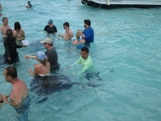 George Town, Grand Cayman: Stingray City