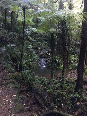 Gold Coast, Australia: B2B Hike 2017