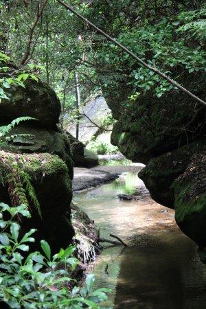 Haleyville, AL: Dismal Canyon Stream