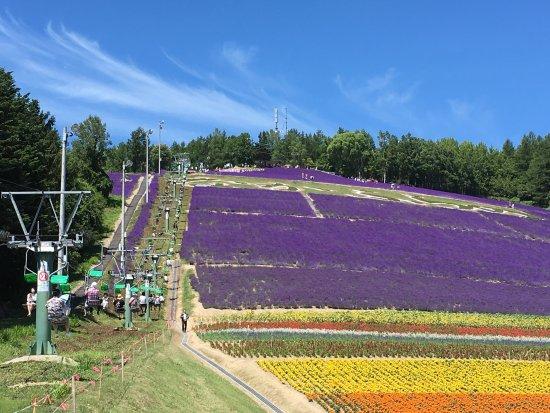 Hasil gambar untuk Choei Lavender Farm and Nakafurano Flower Park