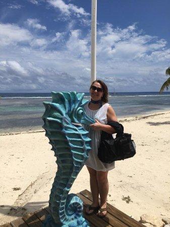 Cayman Brac: 2157_large.jpg