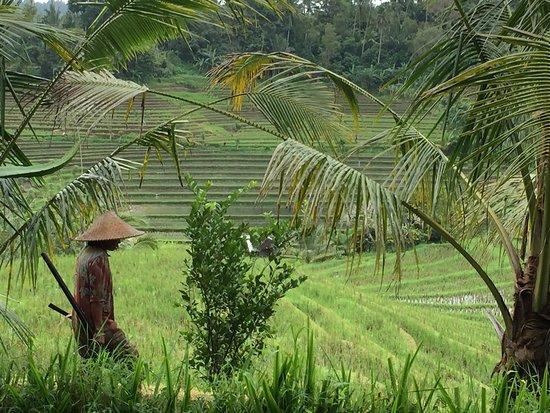 Bali Kingdom Tour