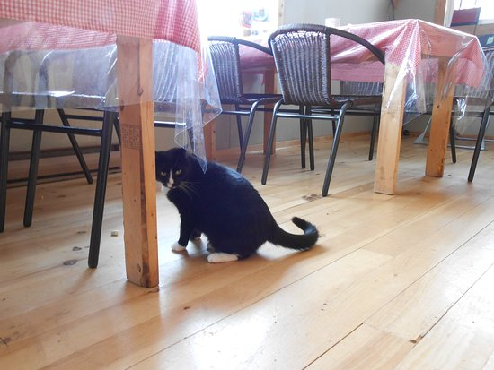 The Dancing Moose Cafe: This cute kitty hangs out in the cafe.