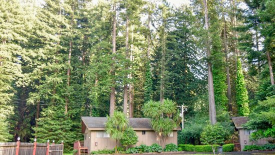 Northwood Lodge & Resort: Cottage in the Redwoods