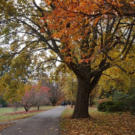 Olinda, Australia: Autumn colours