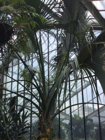 Kew, UK: Inside the greenhouse