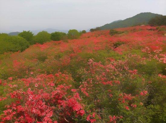 Mt. Tokusenjo: 20170523_201348_1849004715_large.jpg