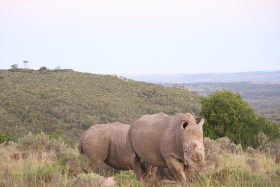 Sidbury, Sudáfrica: IMG_7182_large.jpg