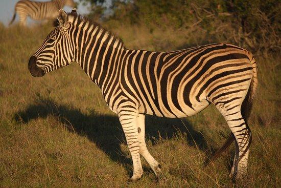 Sidbury, Sudáfrica: IMG_7254_large.jpg