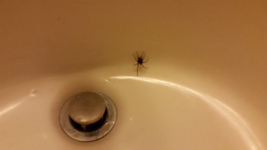 Bellevue, NE: Couldn't wash my hands because of disgusting spider