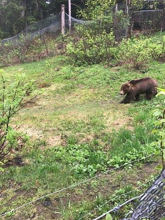 Haines, Alaska: photo3.jpg