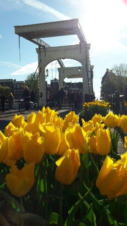 Magere Brug: Tulips on the Skinny Bridge