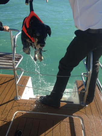 ‪‪Akaroa‬, نيوزيلندا: Doggy overboard!‬