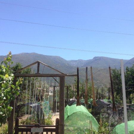 Orgiva, Spagna: In the garden