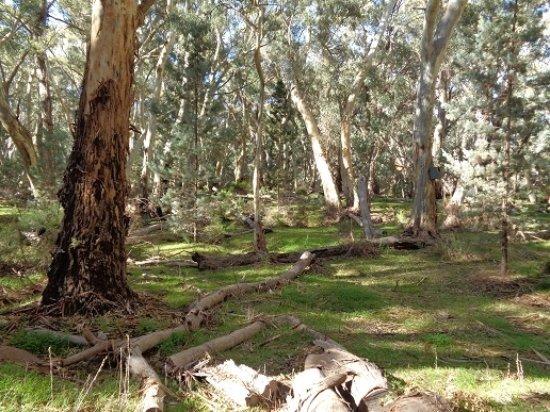 Flinders Ranges National Park Resmi