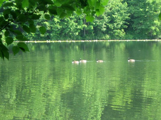Ellicott City, Мэриленд: A summer photo--I call Green Horizontality with Geese. c. 2012.