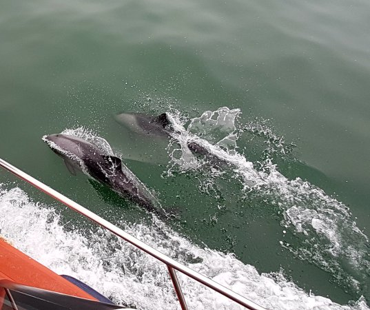 Walvis Bay, Namibia: dauphin croisière en bateau