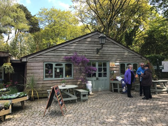St Austell, UK: Pinetum Park and Pine Lodge Gardens