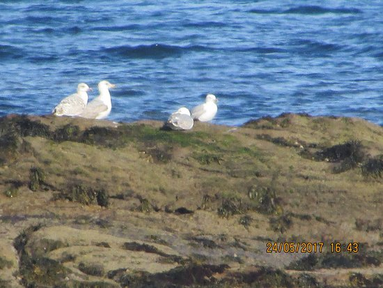 Newbiggin-by-the-Sea, UK: Local Wildlife