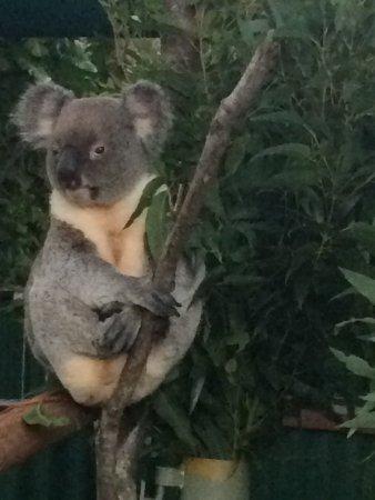 Currumbin, Australien: photo0.jpg