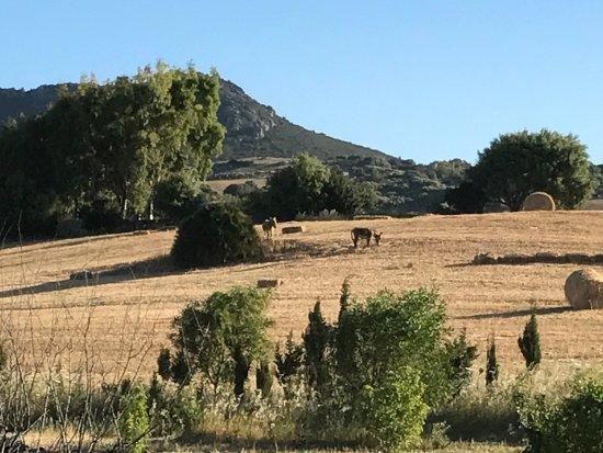 Santa Maria La Palma, إيطاليا: photo1.jpg
