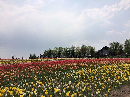 Takino Suzuran Hillside National Park 사진