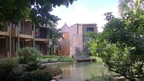 Tamarin-billede