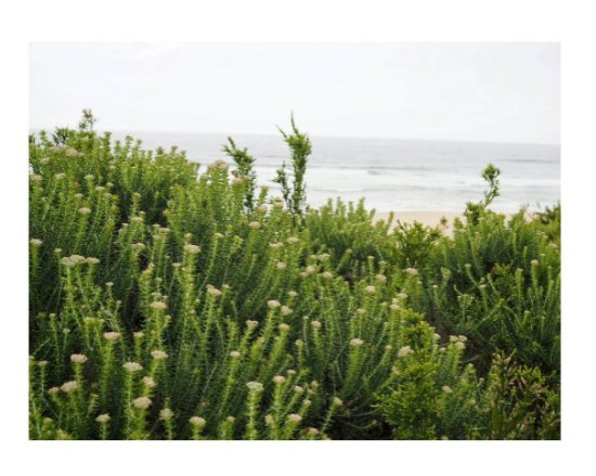Goukamma Nature Reserve: Vegetation and the sea