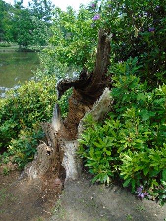 Esher, UK: Mature tree (!) by the lake