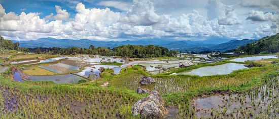 Batutumongga: Batutumonga Tana Toraja Indonesia