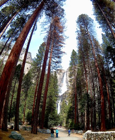 Extranomical Tours: Majestic trees